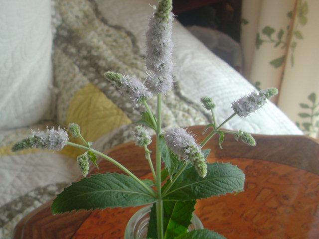 花!「ホースミント」